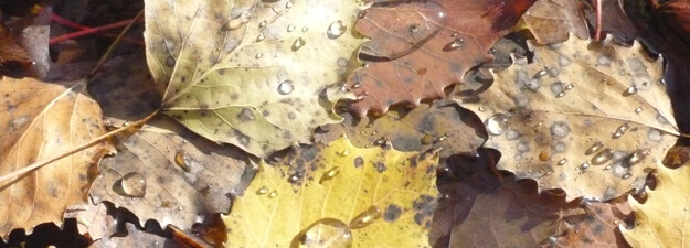 Pluie, gouttière, environnement