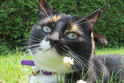 Chronique SPA de l'Estrie, dehors, animaux, chat