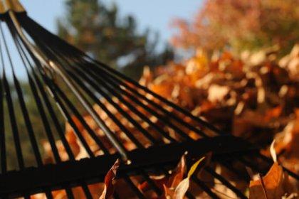 collecte de feuilles, automne, Ville de Magog