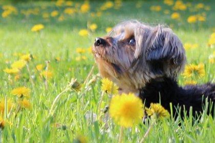 Renouvellement licences animaux, SPA, Magog