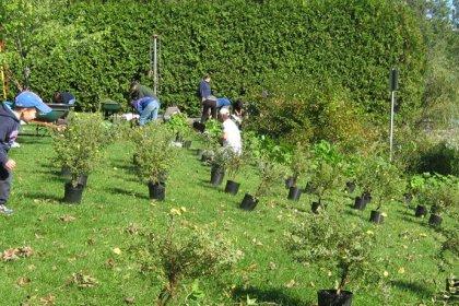 Bande riveraine, plants distribution