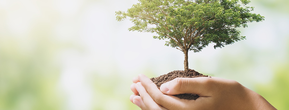 Ville de Magog | Politique environnementale et plan d'action