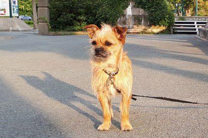 Actualité chiens dans les parcs